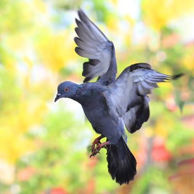 Pigeonleisuretime70400shutterstock_180439106