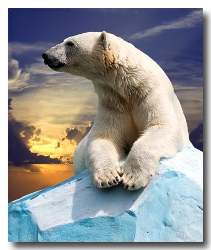 PolarBearIakov_Filimonovshutterstock400_89621446