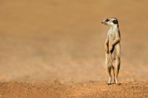 Image Credit: EcoPrint/Shutterstock.com