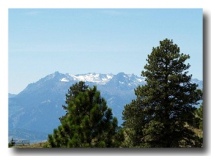 Conifer trees in Birch Mountain California