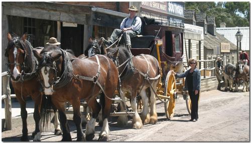 Carolyn at BallaratAren't the horses simply gorgeous...!