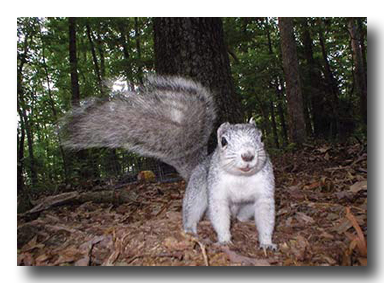 A Squirrel - Photo Credit: US Fish and Wildlife Service