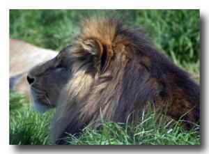 Photo Courtesy: Keith Compton - Taken at Melbourne Zoo.