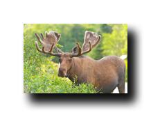 Image Credit: Wildnerdpi/Shutterstock.com