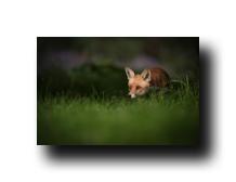 Image Credit: Andrew Astbury/Shutterstock.com