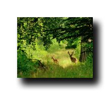 Image Credit: Bruce MacQueen/Shutterstock.com
