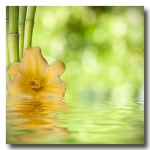 Image Credit: carballo/Shutterstock.com