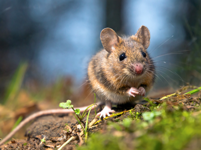 Mouse400CreativeNature.nshutterstock_92023034