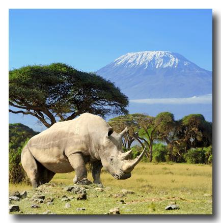 RhinoVolodymyr_Burdiak400shutterstock_190800623