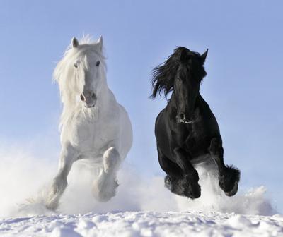 HorsesMakarova_Viktoria400shutterstock_54540052