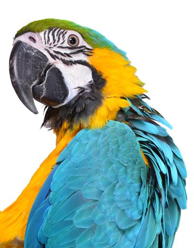 MacawTracy_Starr400shutterstock_151624634