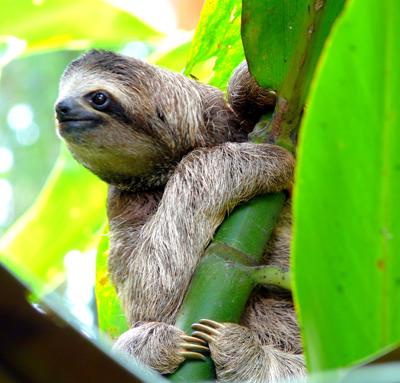 SlothNacho_Such400shutterstock_142460779
