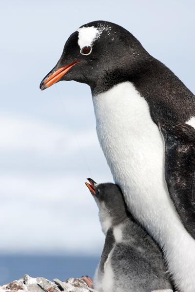 PenguinBildagentur_Zoonar_GmbH400shutterstock_207870979