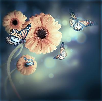 ButterfliesandFlowers400Seqoyashutterstock_121882087